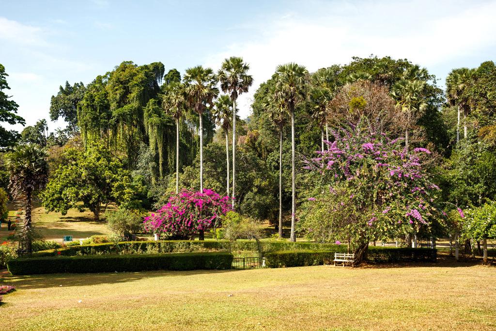 Фото: Королевский ботанический сад