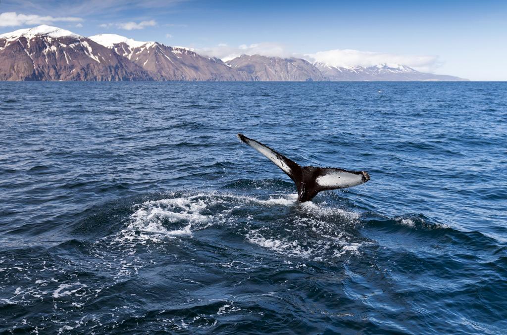 Фото: Столица китов