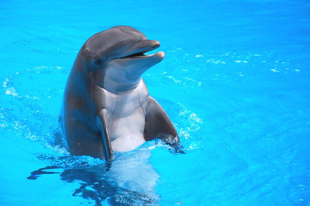 Фото: Шоу с участием дельфинов