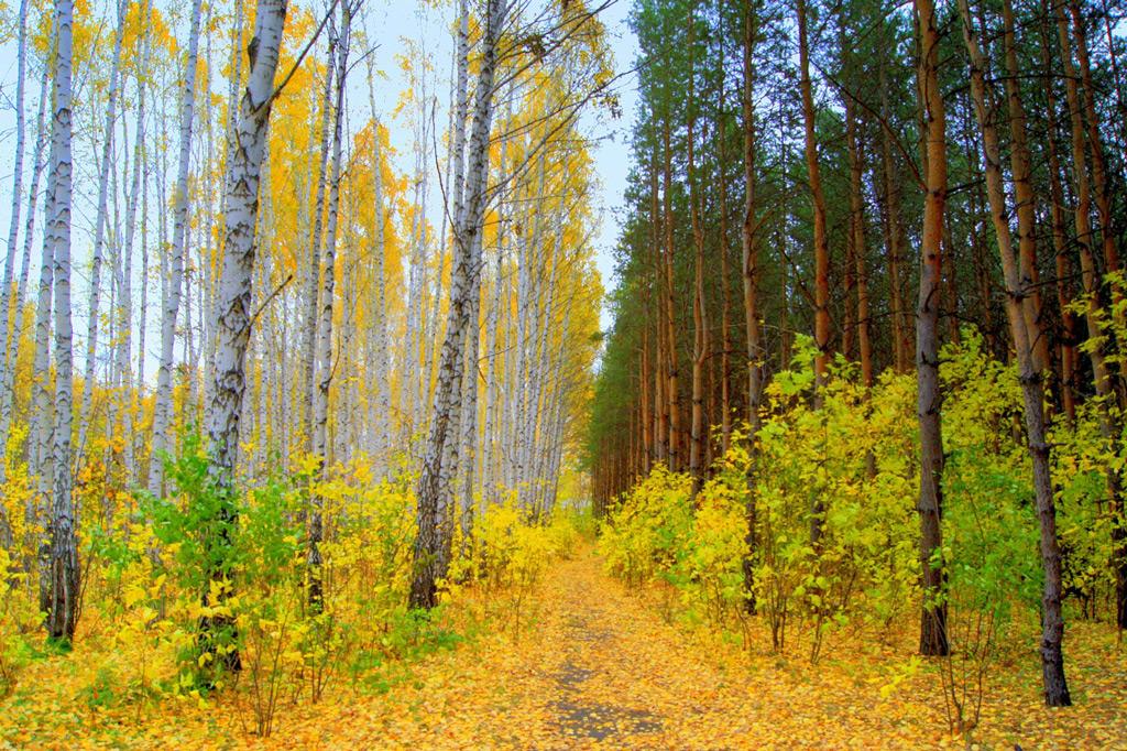 Фото: Дендрологический парк