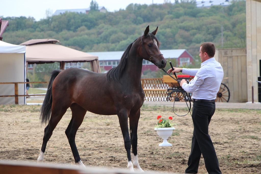Фото: Терский конный завод