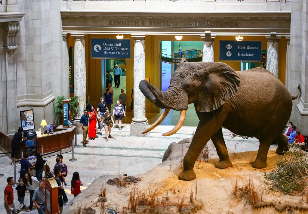 Фото: Национальный музей естественной истории