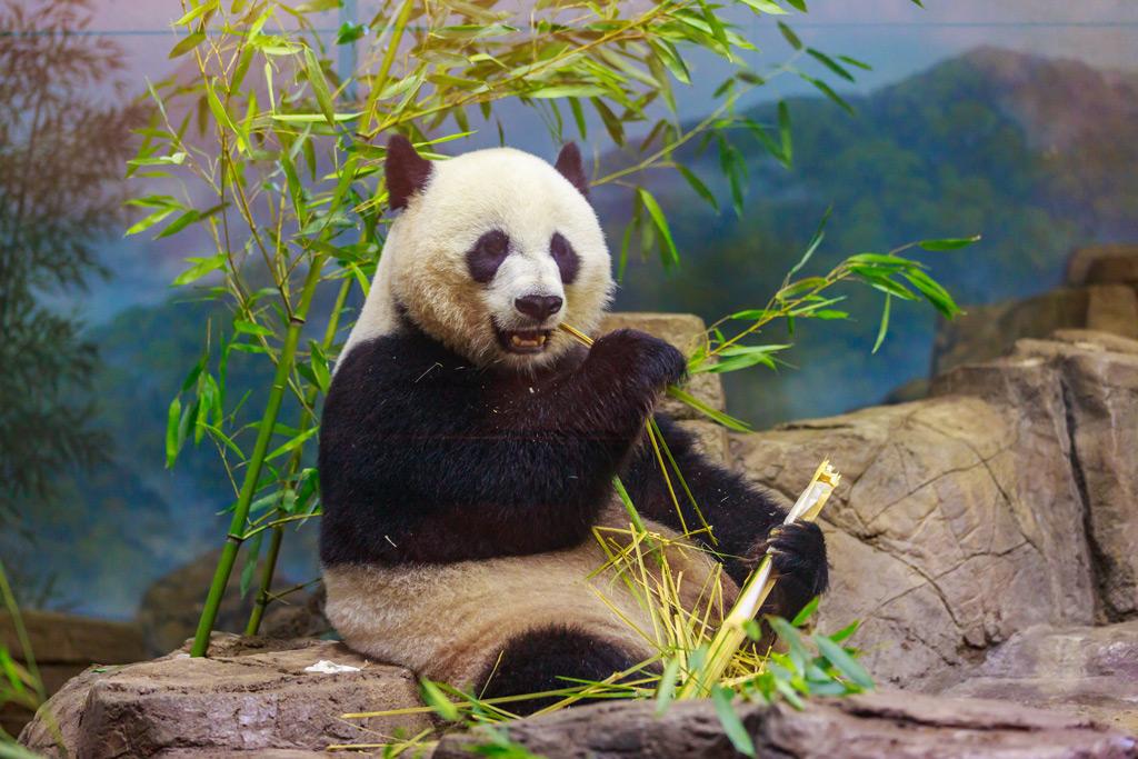 Фото: Смитсоновский национальный зоологический парк