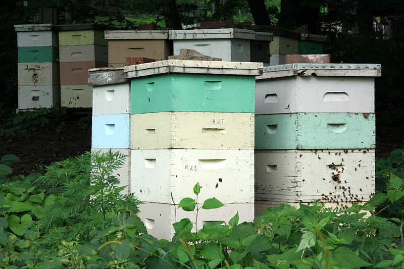 ?כיצד הדבורה מייצרת דבש by itamar sasson - Ourboox.com