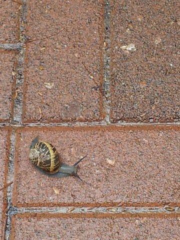 חִלָּזוֹן אֶחָד קָטָן by Sigal Magen - Illustrated by צילומים: סיגל מגן - Ourboox.com