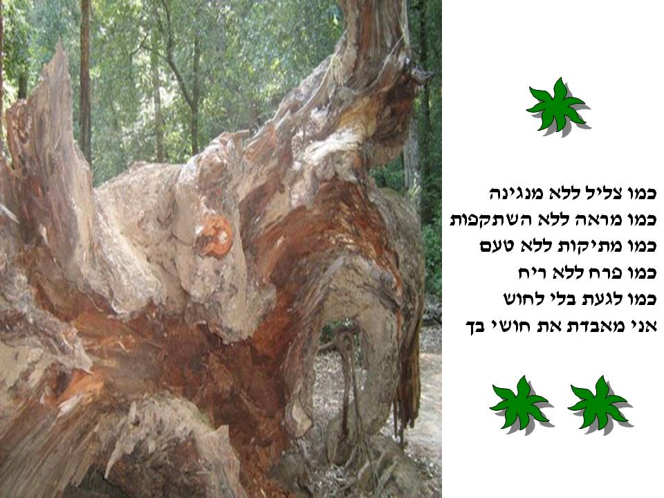 Artwork from the book - Lines written on wood   –  שורות כתובות בעץ by Rachel Tucker Shynes - Illustrated by כתיבה וצילומים - רחל טוקר שיינס (C) - Ourboox.com
