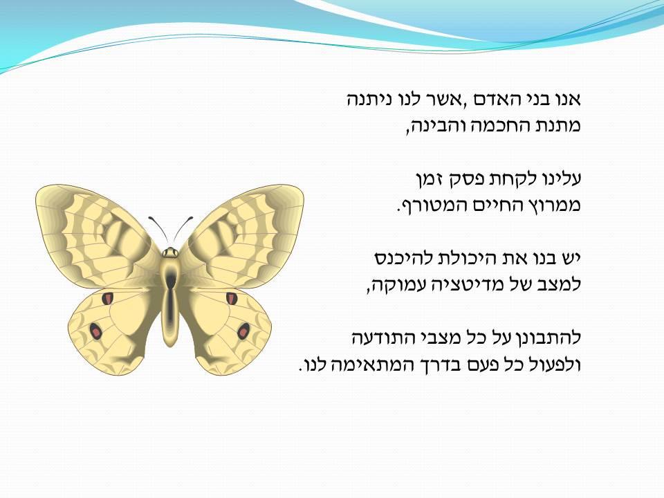 גלגולו של פרפר by Rachel Tucker Shynes - Illustrated by כתיבה:  רחל טוקר שיינס - Rachel Tucker Shynes - Ourboox.com