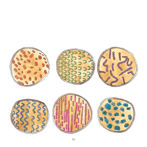Artwork from the book - Bacteria Galore by Sunday at Four Illustrations: Tali Niv-Dolinsky by Mel Rosenberg - מל רוזנברג - Illustrated by Tali Niv-Dolinsky - Ourboox.com