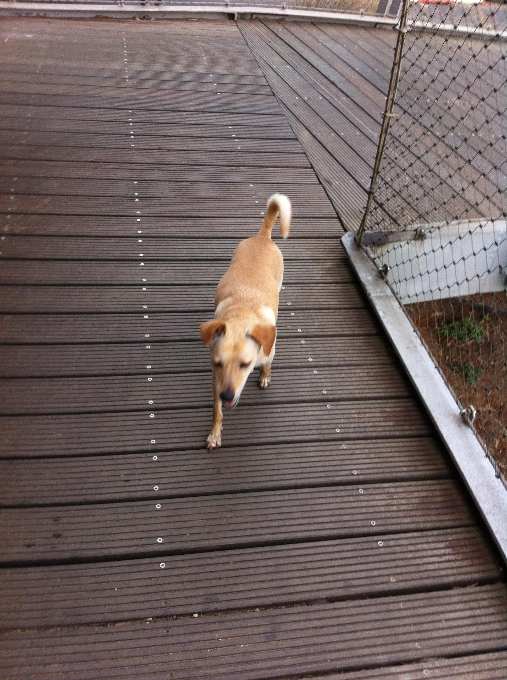 a drooling rabid dog