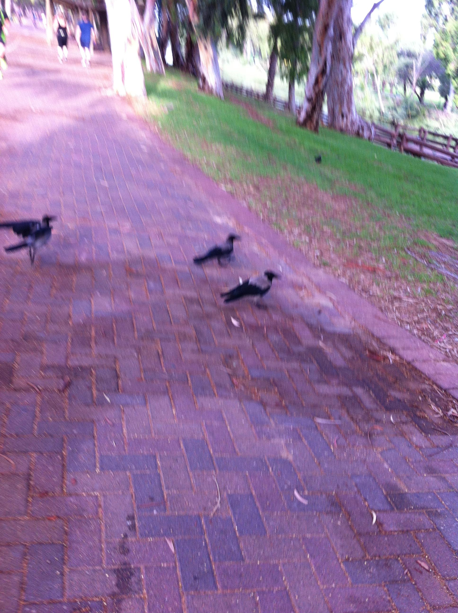 revenge-bent ravens