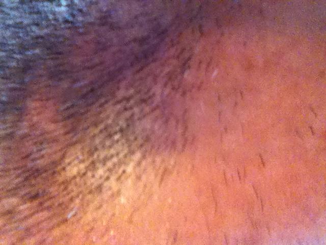 כמה שערות על הפדחת של מל