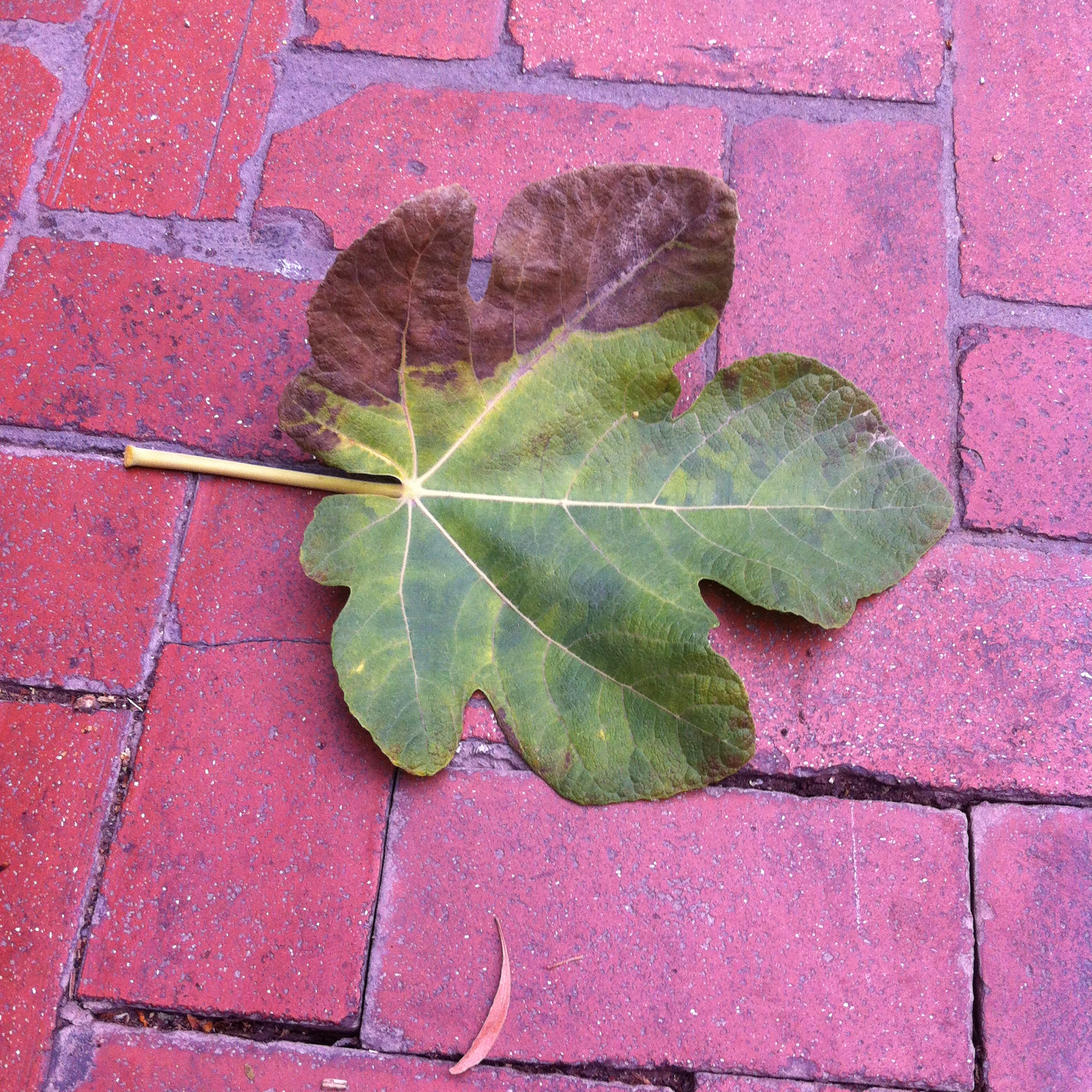 We smelled the smell of autumn on a fallen leaf