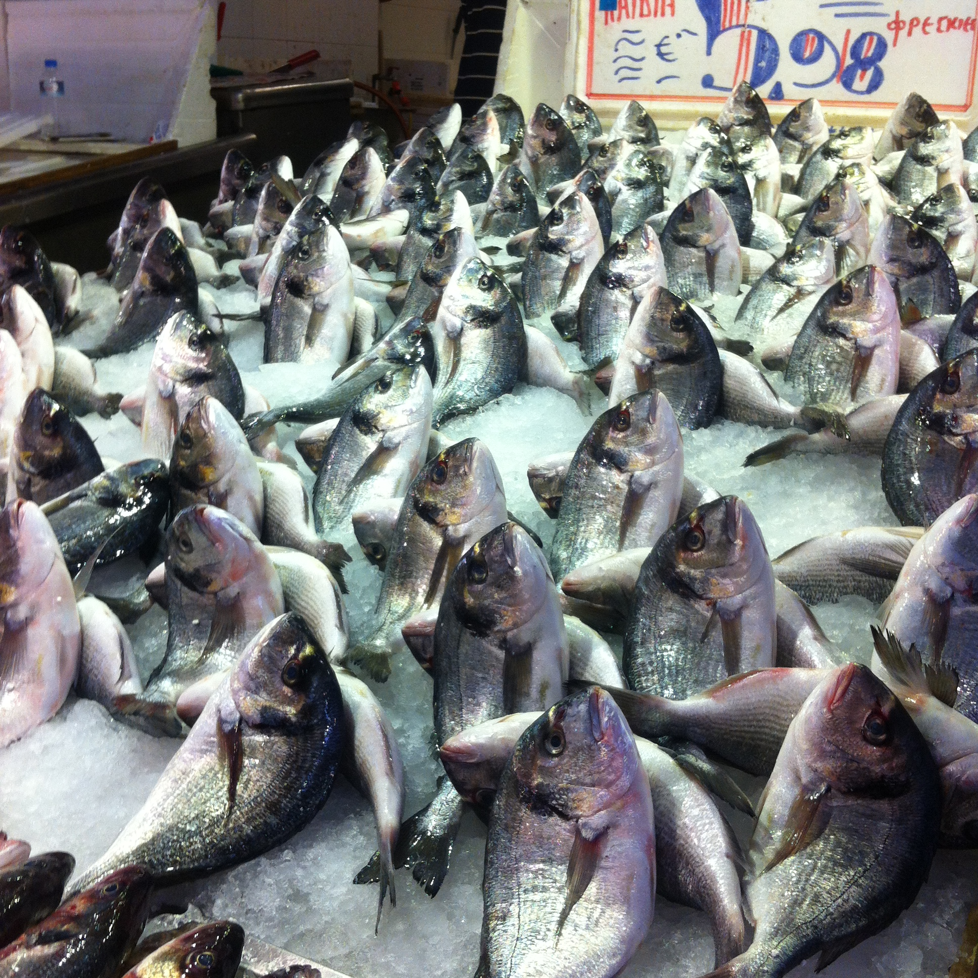 At the meat market, Everyone was waiting to meet us