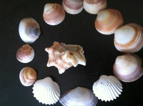 מחרוזת מן הים by judy.shiran  - Illustrated by Judy Shiran - Ourboox.com