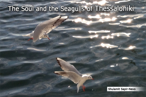The Soul and the Seagulls of Thessaloniki by Shulamit Sapir-Nevo - Illustrated by Photos by Shulamit Sapir-Nevo - Ourboox.com