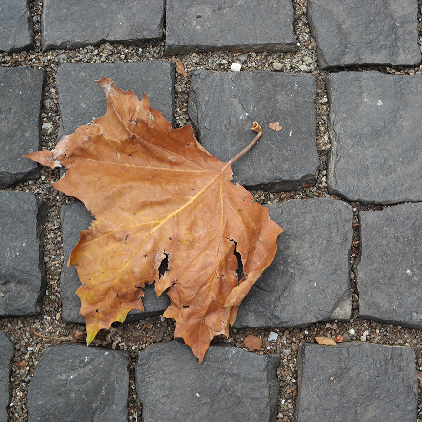 Why Geneva? by Dr. Oscar Or-El - Illustrated by Oscar Or-El, Ph. D. - Ourboox.com