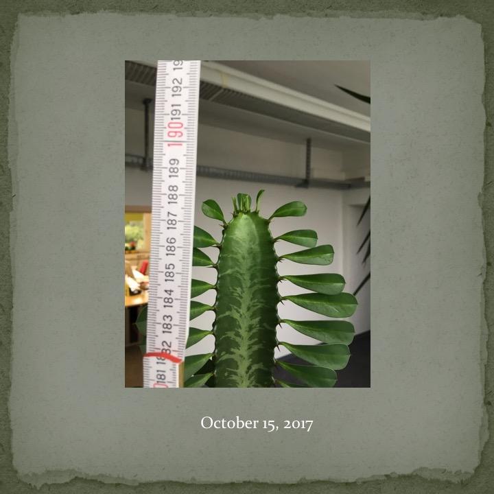 Cactus Man by Stephen Pohlmann - Ourboox.com