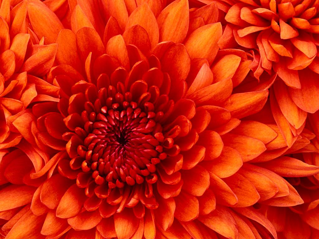 My Sweet Dream by hosam falah - Ourboox.com