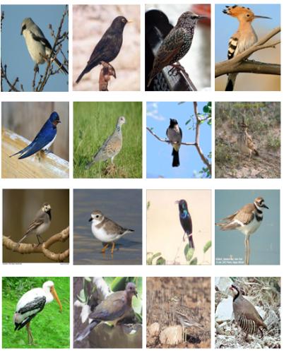 الطيور المهاجرة في فلسطين