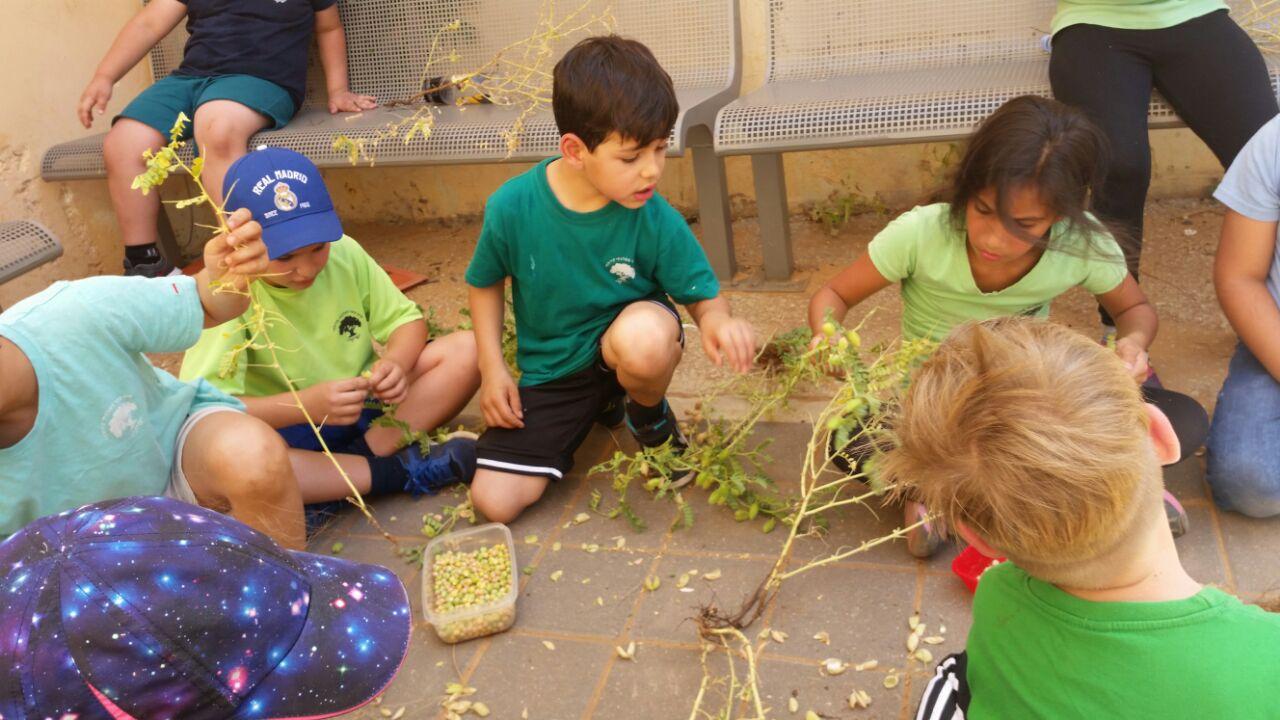 גינה וחממה אקולגית בבית ספר שיזף אור יהודה by אילן  - Ourboox.com
