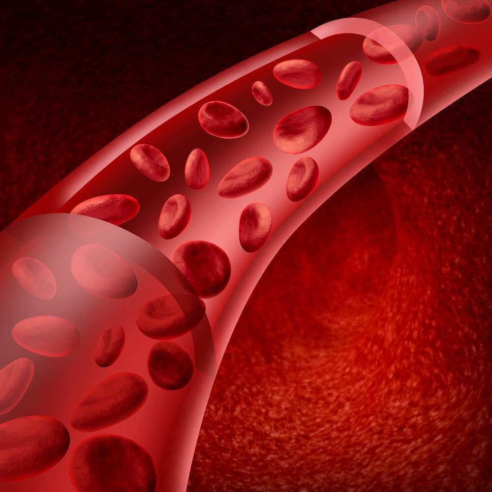 דם ולב by bassal adi - Ourboox.com