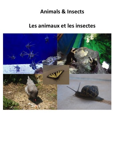 Animals and Insects by Gail Prasad - Ourboox.com