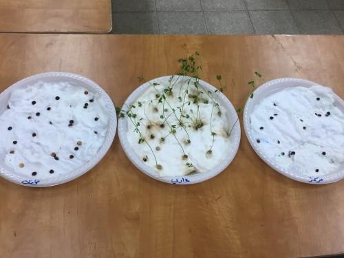 الحكم مركب ليل تجربة زراعة العدس في القطن Sjvbca Org