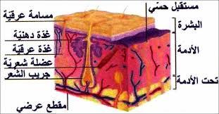 التعفن الجرثومي by SIWAR - Illustrated by SIWAR BOUKHILLI - Ourboox.com