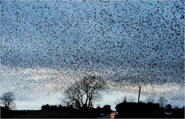 الطيور المهاجرة by noor - Illustrated by تور ابو قويدر  - Ourboox.com