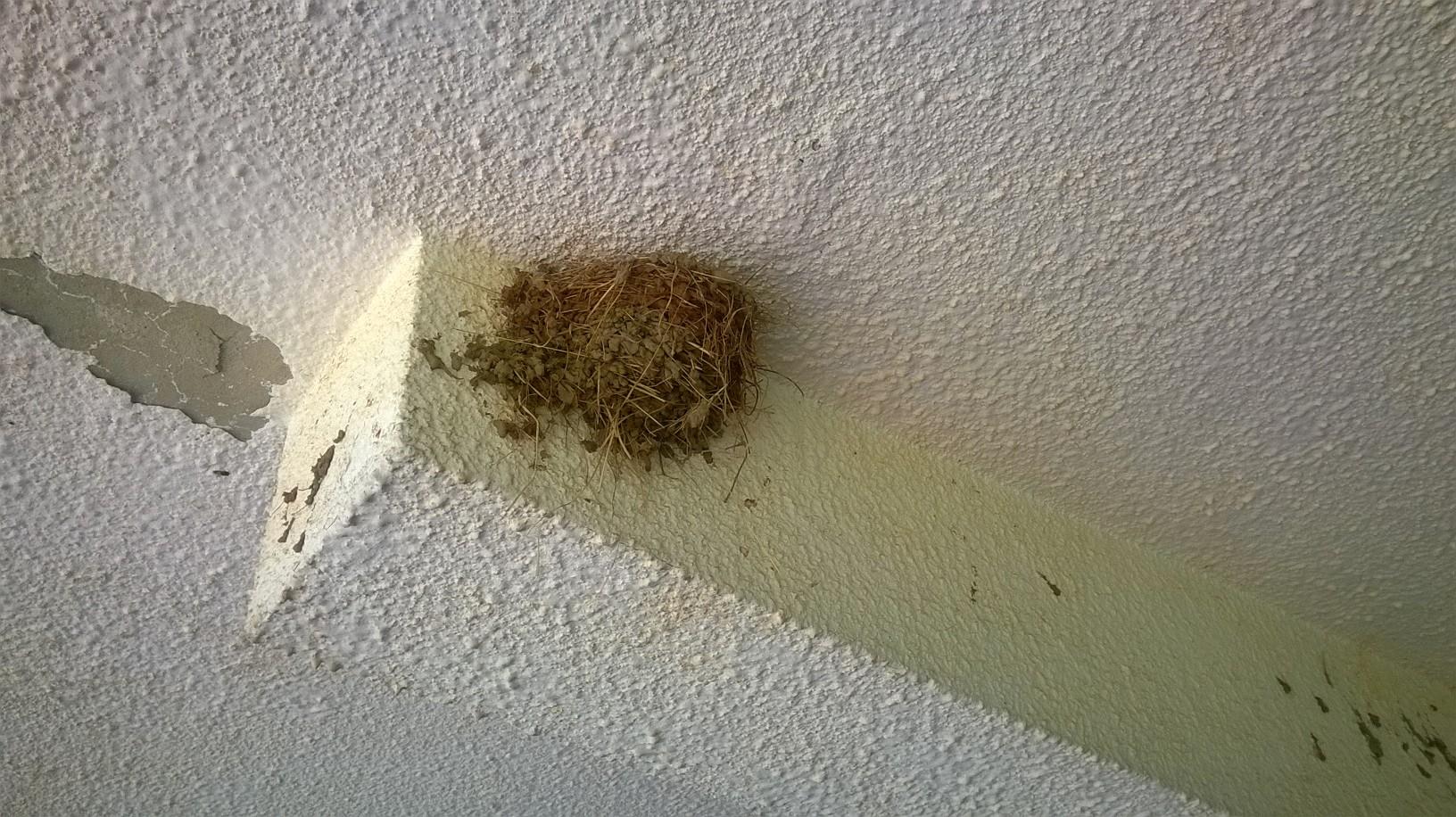 гнездо ластавице