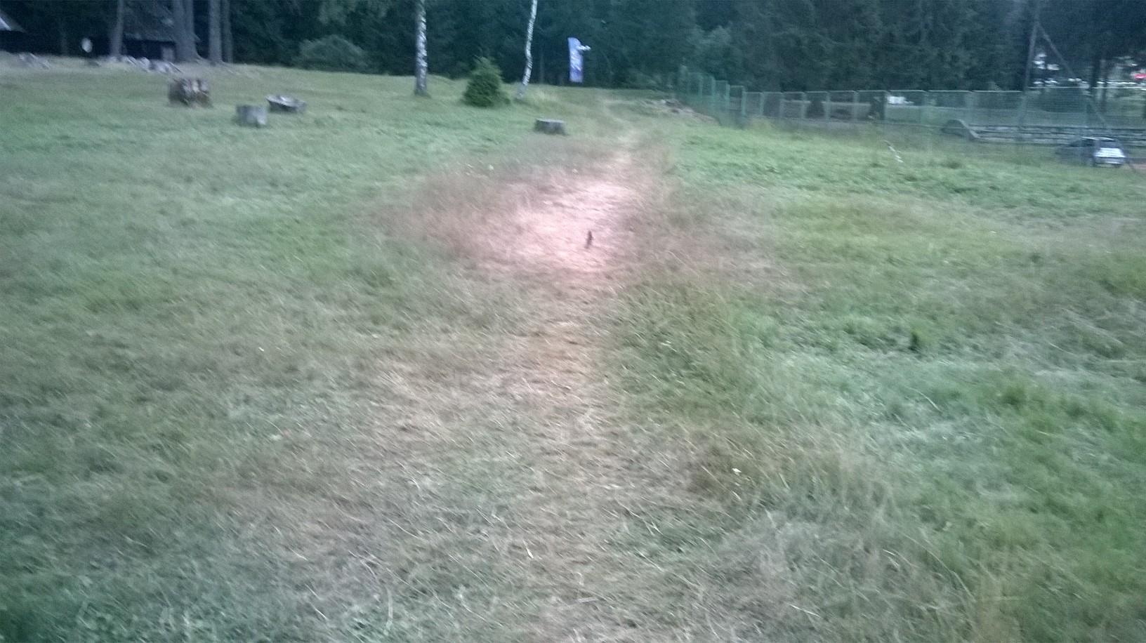 птица на пешачкој стази