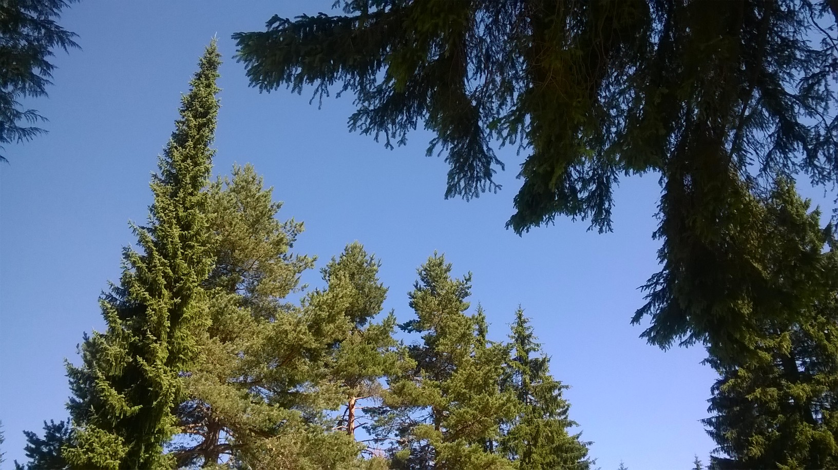 небо и врхови дрвећа
