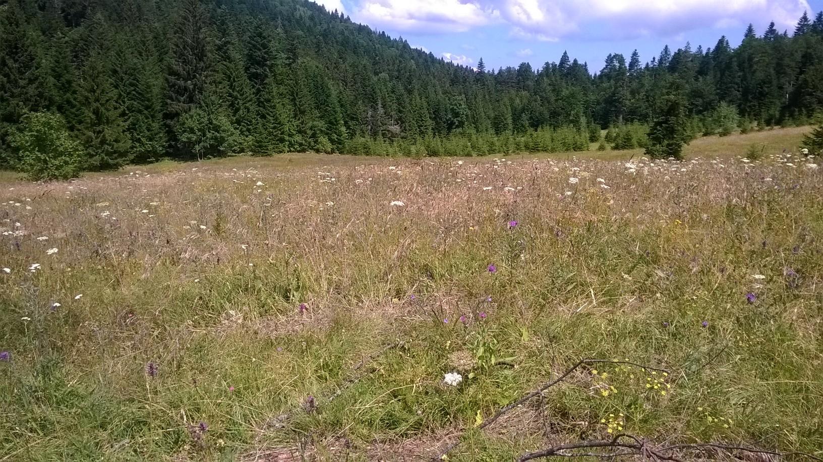 шумска ливада код чеке за медведе