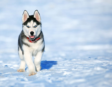 פנטסטי כלבים - Ourboox MA-28
