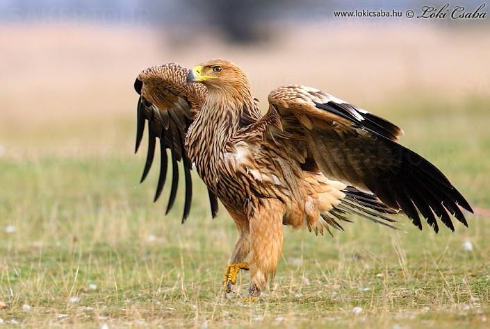 Keep Endangered Species in Bulgaria! by