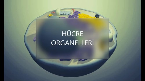 Artwork from the book - HÜCRE ORGANELLERİ by elif özge - Ourboox.com