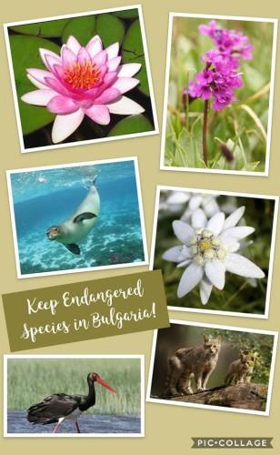 Keep Endangered Species in Bulgaria! by 'Nesho Bonchev' High School 8v - Ourboox.com