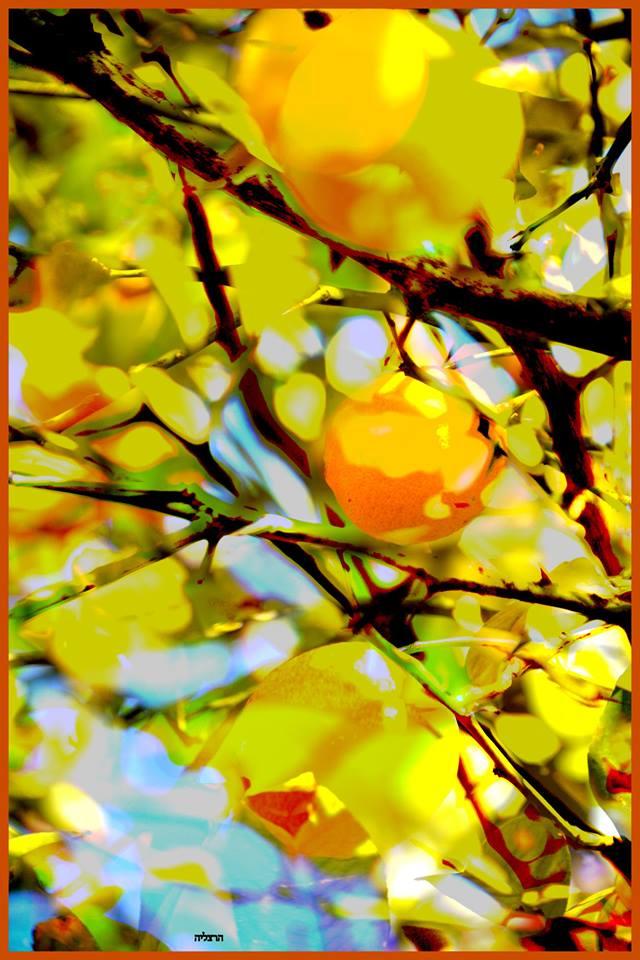 """הרצליה הופמן – """"דרך העדשה"""" סדנת צילום by Yoged - יגודז"""