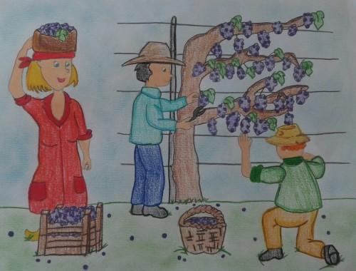 Artwork from the book - L'uva e il vino by Raffaela Donataccio - Illustrated by Raffaela Donataccio, Del Priore Pina,   Polignone Rosa,  De Monte Lucia,   Di Nauta Liliana, Giannetta Assunta - Ourboox.com