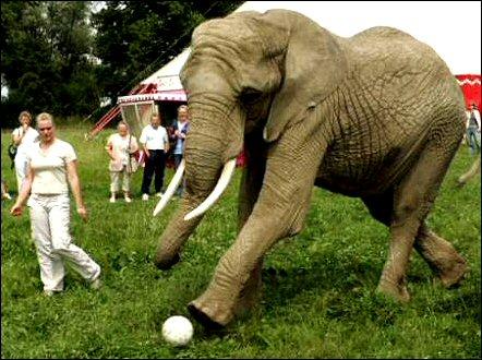 כַּדּוּר בַּגּ'וּנְגֶּל מאת מילי בר ולילך ברדה by lilachbarda - Illustrated by google - Ourboox.com