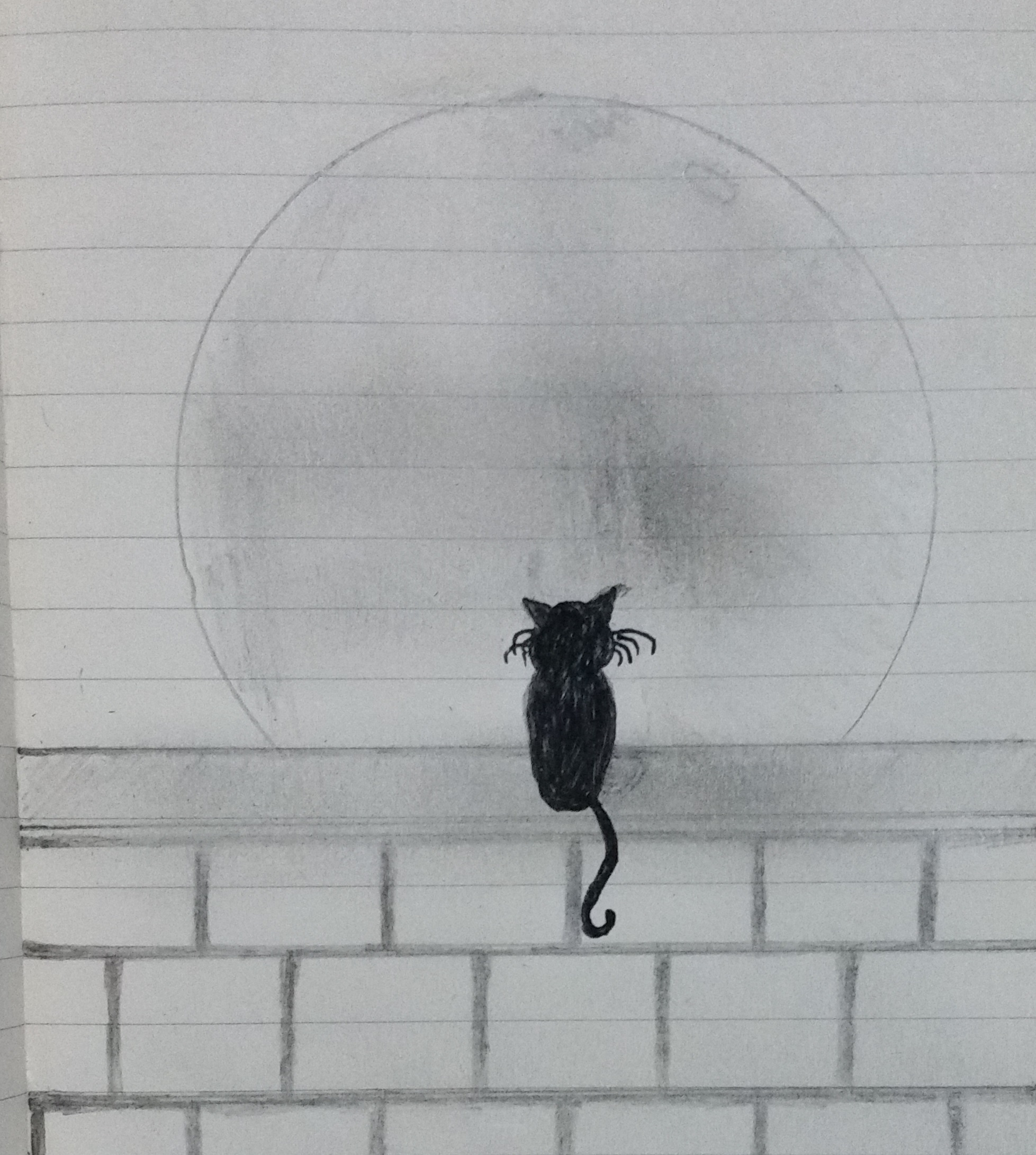 A cat and the moon