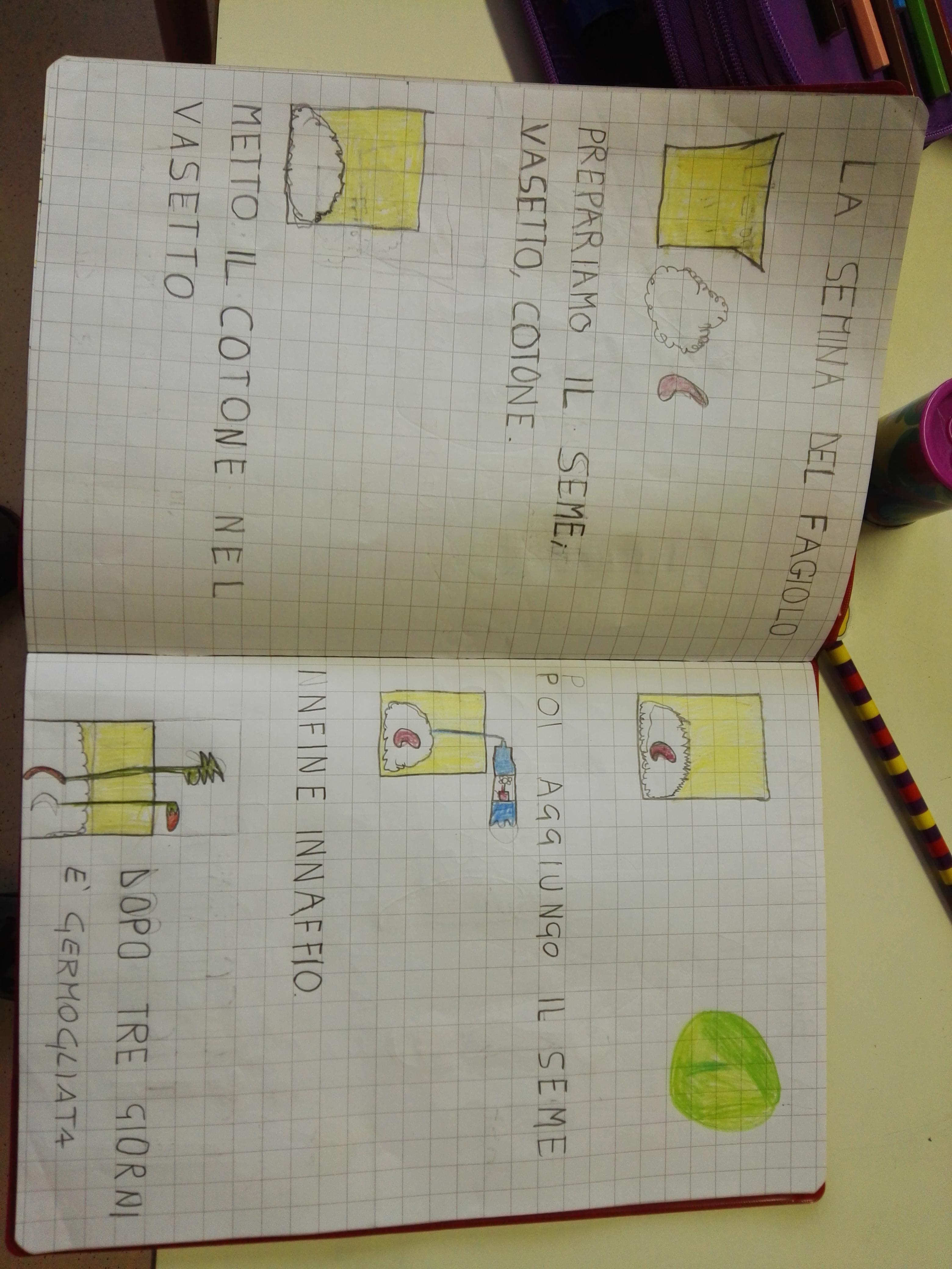 IL PERCORSO DELLA SEMINA by E - Illustrated by Gli alunni delle classi prime, aiutati dalla maestra Elvira. ANNO SCOLASTICO '18-'19 - Ourboox.com