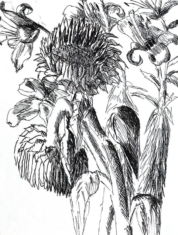 flowers drawings flower drawing