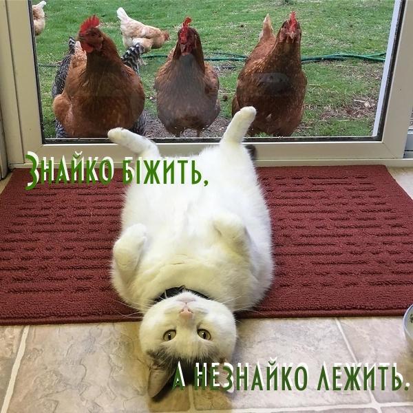 Мудрі меми by Natalka - Illustrated by Беспалько Наталя Вікторівна - Ourboox.com