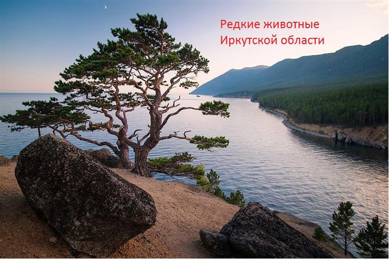 Редкие животные Иркутской области by aleksandr - Ourboox.com