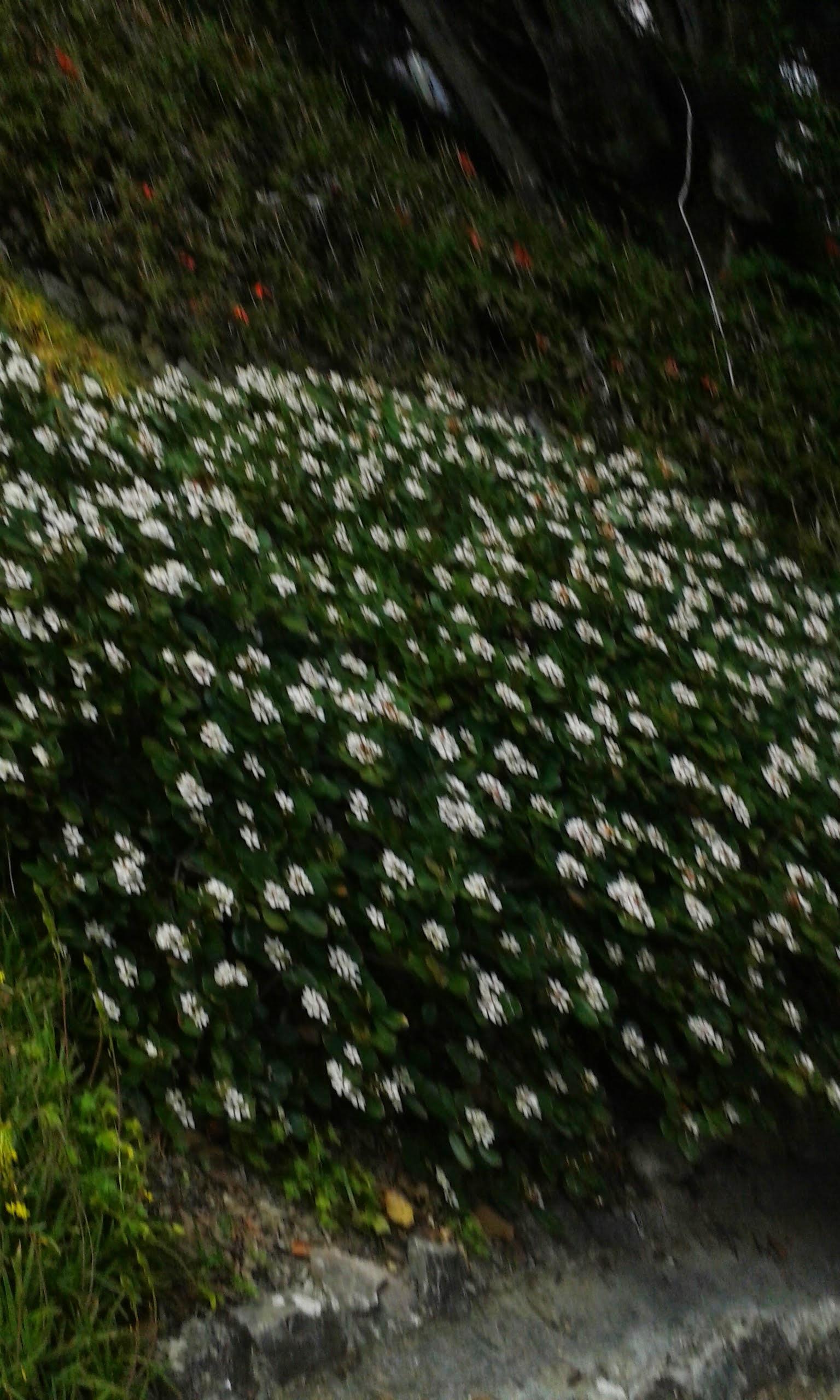 Visita al Giardino Botanico di Villa Habury by Maria Luisa Reforti Tribbio - Illustrated by Classi Prime di Scuola Secondaria di Villa Hanbury - Ourboox.com