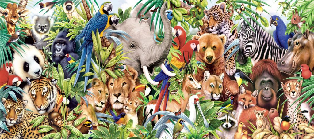 Information about animals