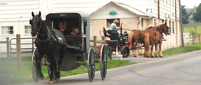 The Amish by tamar serkalem - Illustrated by tamar , sara , serkalem - Ourboox.com