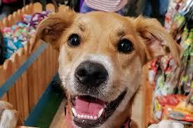 "Artwork from the book - שלושה כלבים במבה, שוקולד ותות by אילן  - Illustrated by נכתב ע""י סתיו,שובל, שלמה, נועם ואיתן - Ourboox.com"