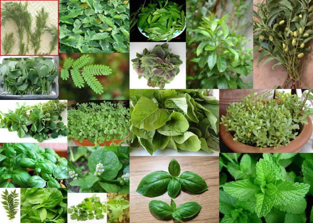 النباتات العطرية by rawnaq - Illustrated by رونق محاجنة - Ourboox.com